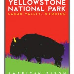 Yellowstone National Park: American Bison