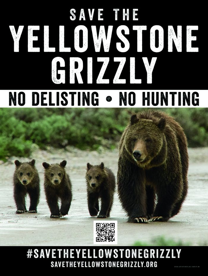 Save The Yellowstone Grizzly poster